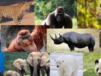 hewan yang terancam punah